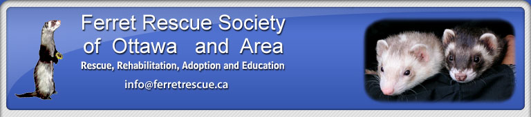 Ferret Rescue Society of Ottawa and Area